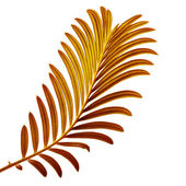 Colored Palm Leaf — Stock Photo