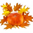 Pumpkin decoration with Colorful autumn fall leaves. isolated on white background — Stockfoto