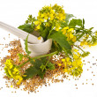 Mortar with pestle and flowering mustard isolated on white background — Stock Photo
