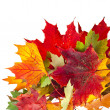 Stock Photo: Corner Border of colored falling leafs on white background