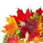 hörnet gränsen av färgade fallande blad på vit bakgrund — Stockfoto