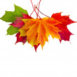 Colorful autumn fall leaves maple isolated on white background — Stock Photo
