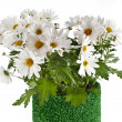 Chamomile flower bouquet in rolled green grass vase isolated on white background — Stock Photo