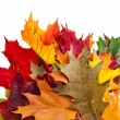 Corner Border of colored falling leafs on white background — Stock Photo #28462735
