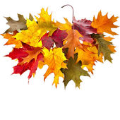 Border of colored falling leafs quercus rubra close up on white background — Stock Photo