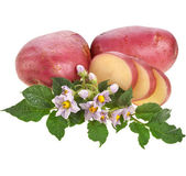 Potatoes with green leaves and inflorescence isolated on white — Stock Photo