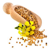 Mustard seeds heap in wooden scoop spoon isolated on white background — Stock Photo