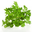Fresh bunch of curly parsley isolated on white background — Stock Photo
