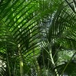 Tropical forest with palm plants — Stock Photo