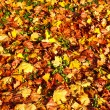 Autumn background from the fallen colorful leaves — ストック写真