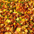 Autumn background from the fallen colorful leaves — Stock Photo #31700049