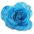 Beautiful blue rose with water drops surface close up macro shot isolated on white background — Stock Photo