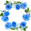 Frame border of beautiful blue rose with water drops surface isolated on white background — Stock Photo
