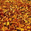 Autumn fallen colored leaves textured background — Stock Photo