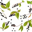 Collection set of bird cherry branch with berries isolated on a white background — Stock Photo