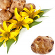 Jerusalem artichoke with flower and leaves stem , corner border close up isolated on white background — Stock Photo #31700379