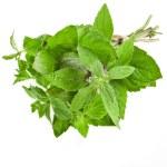 Fresh Oregano or Marjoram Herb close up macro (origanum majorana ) isolated on white — Stock Photo #31700421