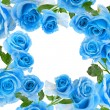 Frame border of beautiful blue rose with water drops surface close up isolated on white background — Stock fotografie