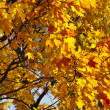 Stock Photo: Colored autumn trees outdoors background wallpaper