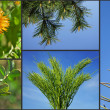 Stock Photo: Healing drug plants herbs on blue sky