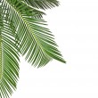 Border of Palm leaves close up isolated on white background — Stock Photo