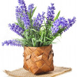 Basket with lavender flowers bouquet isolated over white background — Stock Photo #31700943