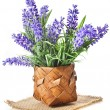 Basket with lavender flowers bouquet isolated over white background — Stock Photo