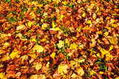 Autumn background from the fallen colorful leaves — Stock Photo