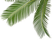 Corner Border of Palm leaves close up with copy space, isolated on white background — Stock Photo