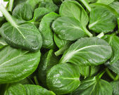 Fresh green leaves spinach or pak choi surface close up — Stock Photo