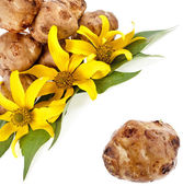 Jerusalem artichoke with flower and leaves stem , corner border close up isolated on a white background — Stock Photo