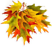 Colored autumn fall leaves oak tree ( Quercus rubra ) isolated on white background — Stock Photo