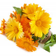 Wrap bouquet orange flower of calendula Officinalis — Stock Photo