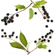 Border frame of bird cherry branch with berries  — Stock Photo