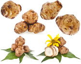 Jerusalem artichoke collection set with flower and leaves stem — Stock Photo