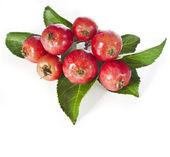 Apple fruits close up heap pile — Stock Photo