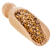Mustard seeds close up in wooden scoop spoon — Stock Photo
