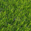 Natural green grass field background surface top view texture — Stock Photo