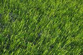 Trama superficiale vista dall'alto di erba verde naturale campo sfondo — Foto Stock