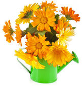 Orange flower bouquet of calendula in a watering can — Stock Photo