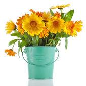 Orange rural bouquet heap of calendula in bucket box — Stock Photo