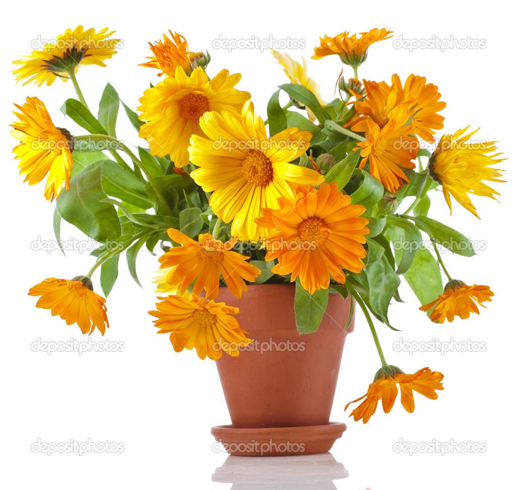 beau bouquet de fleurs calendula officinalis en pot de fleurs en c ramique photographie. Black Bedroom Furniture Sets. Home Design Ideas