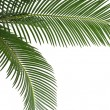 Green leaf of palm tree, border frame on white background — Stock Photo #36634915