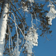 Winter rime and snow ice covered fir Christmas tree on blue sky background — ストック写真