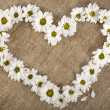 Flowers daisy shape heart on a canvas background, valentines day card concept — Zdjęcie stockowe