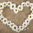 Flowers daisy shape heart on a canvas background, valentines day card concept — Foto de Stock