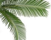 Green leaf of palm tree, border frame on white background — Stock Photo