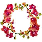 コピーのテキストを白い背景で隔離のための領域と枠蘭の花のクローズ アップ — ストック写真