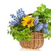 Fresh aromatic herbs in basket isolated on white background — Stock Photo