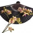 Beauty Black Japanese Paper Fan Surface with Fresh Flower Orchid Isolated on white background — Stock Photo #38075675